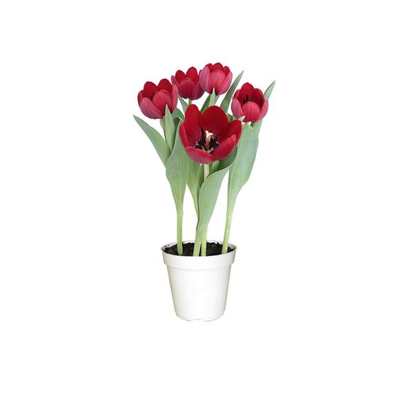 Tulipa pote 12 leroy merlin - Tulipas leroy merlin ...