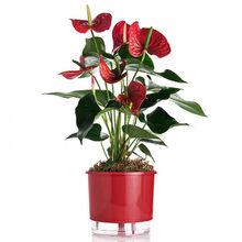 Vaso Auto-Irrigável Raiz - Grande - Liso - Vermelho