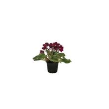 Violeta Mini Pote 06