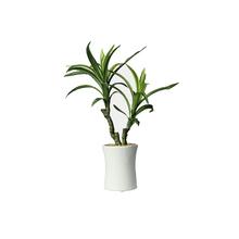 Yucca Vaso 31cm